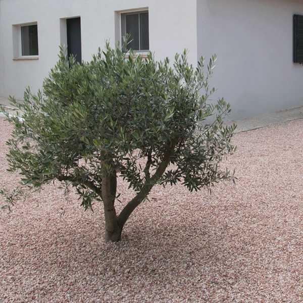 Graviers maison olivier